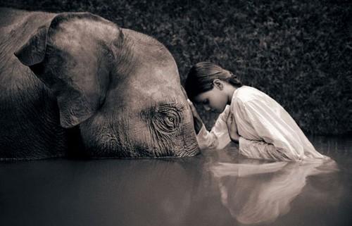 animali-rispetto